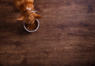 Choosing the Best Dog Food for Allergies